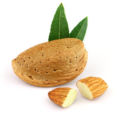 Dried almond with leaves