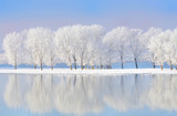 Fototapety winter trees covered with frost