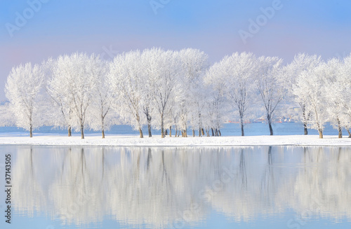 Foto op Aluminium Rivier winter trees covered with frost