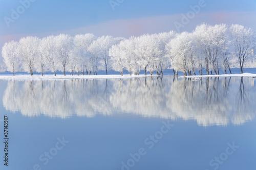 Leinwandbild Motiv winter trees covered with frost