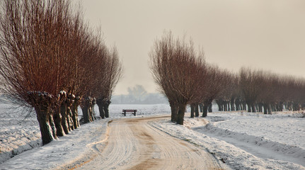 Wintry country road between the willows