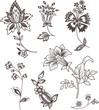 Decor floral elements set for design