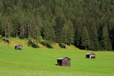 Fototapeta pastwisko - pole - Wysokie Góry
