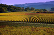 Napa Valley in the fall - 37149960