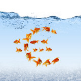 Swimming gold fish and money symbols
