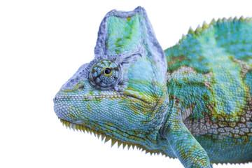 Head of chameleon