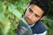 man working in his vineyard