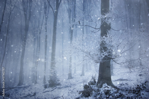 snowfall in magical forest with huge tree in winter
