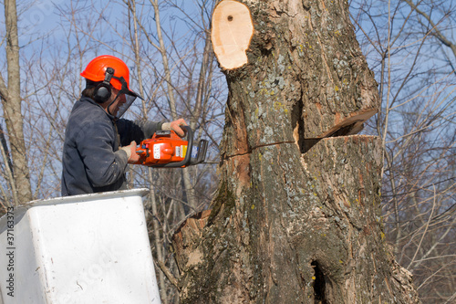 Tree Trimmer at Work