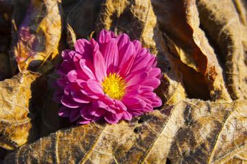 fiore viola tra foglie secche