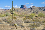 Arizona desert with Saguaro