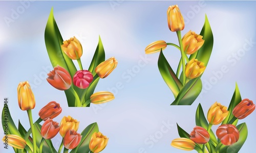 Tulip flower bunch