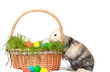 Osterhase verseckt Eier