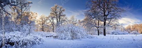 Leinwanddruck Bild Winter panorama of a park at sunny day
