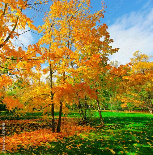 beautiful autumn park - 37188918