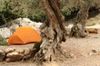 orange tent under olive trees