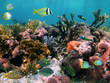 Tropical fish in the corals