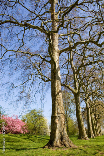 canvas print picture hyde park