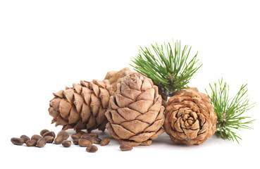 Cedar cones with branch on a white background