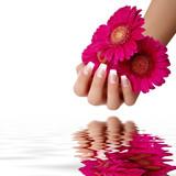 Hand mit einer Gerbera - 37212950