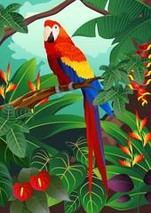 Detailed macaw bird vector