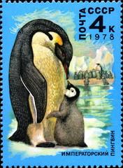 Pingouin  et son bébé. Timbre postal russe. 1978.