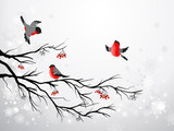 Fototapety Branch and birds bullfinch