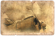 Vintage military postcard isolated, old aircraft