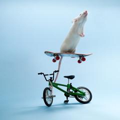 Mouse riding