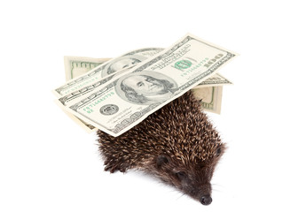 hedgehog of dollars