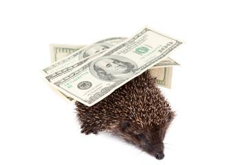 hedgehog of dollars