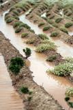 terreno agricolo allagato poster