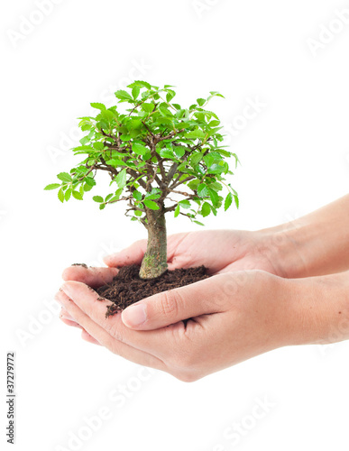 Tree in a hands