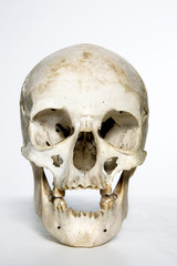 human skull against white