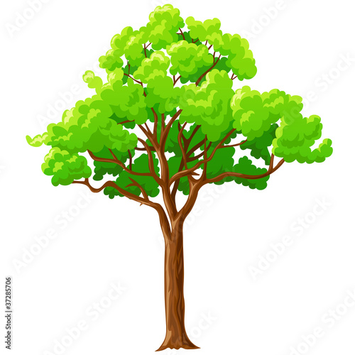 Cartoon green tree isolated on white.
