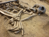 Fototapety Skeleton of ancient man found during excavations in the flood zo