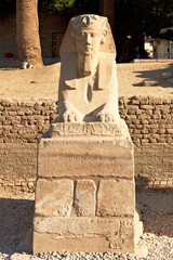 Closeup of one of the Sphinxes at the Temple of Luxor