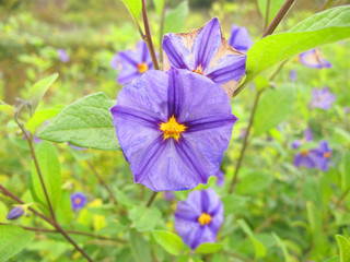 macro flor