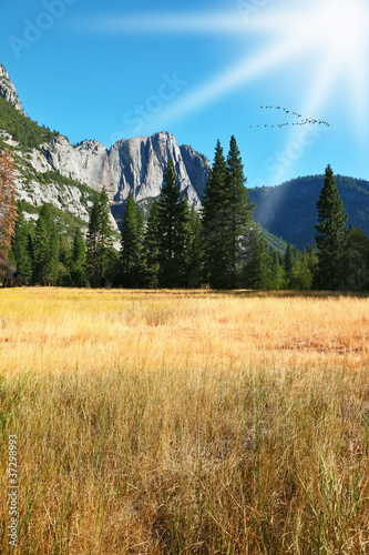 Dense autumn grass in park in California.