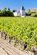 vineyard and Chateau Tronquoy Lalande, Saint-Estephe, Bordeaux