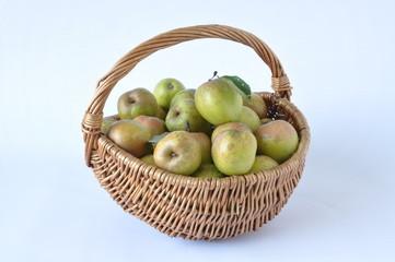 pommes d'Auvergne de variété 'Armoise'