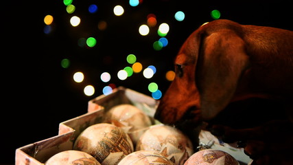 HD - Puppy and Christmas decorations