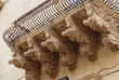 winged horse under the balcony, Noto, Sicily