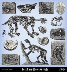 Engraving vintage fossil and skeleton set.