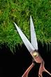 cutting grass blades
