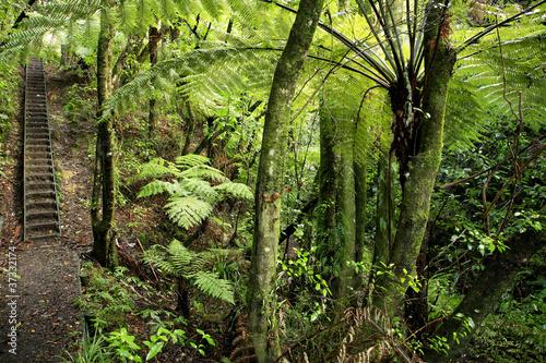 Fototapete urwald  Fototapete Wald - Regenwald - Wald - Pixteria