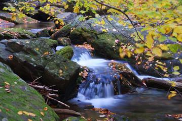 Autumn creek in forest