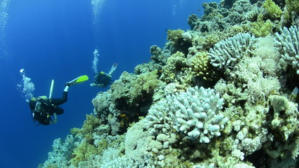 Scuba divers drifting in a current past a coral reef