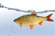 Fische 24