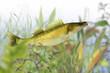 Fische 38